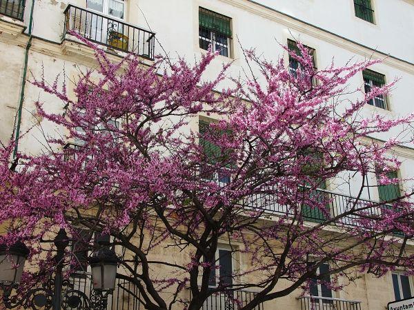Noch mehr Frühling
