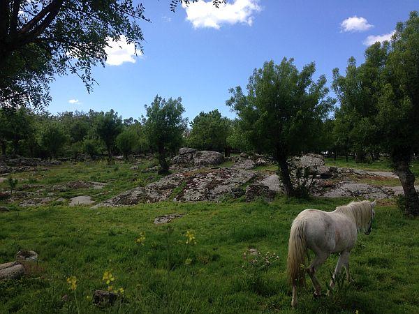 Pferdekoppel in der Sierra
