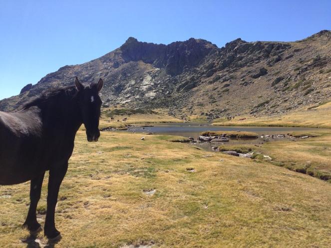 Pferde an der Lagune